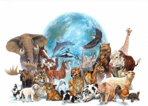 os animais - web