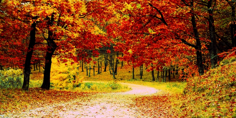 poesie d'autunno