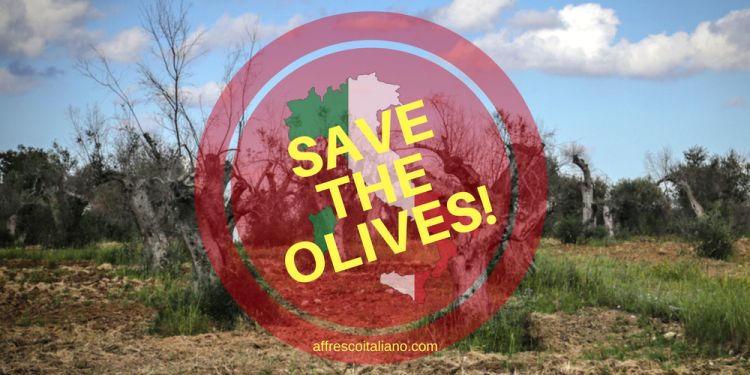 Save our olives!